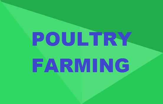 Poultry Farming Course: Everything You Need To Know